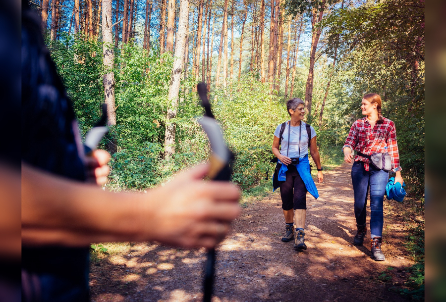 Wandern im Heilwald Bad Lippspringe